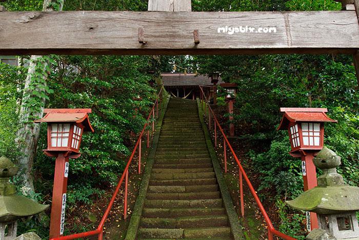 嶽山箒根神社,大杉