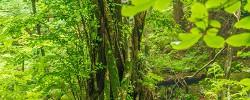 マザーツリーの森