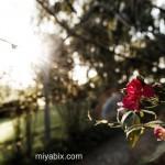 MiyabixPhoto
