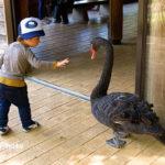好奇心,社交的,怖いもの知らず,動物園