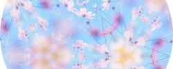 9/16(土)イベントのお知らせ:『瞑想キャンプ・二十六夜の月宵瞑想』SORA HEARTS CORPORATION(雑司ヶ谷 YZR-A)